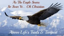 eagles wings, eagle quote