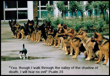 funny psalms 23, funny christian story, dog and cat, yea though I walk through the valley of death