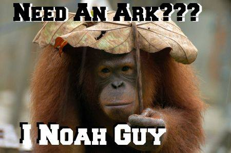 Funny Noah Picture