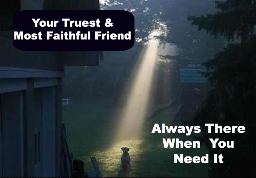 dog always there for you, your best friend, faithful friend