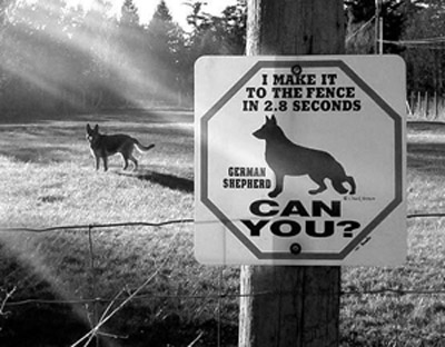 German Shepherd fence, quote, fast dog quote