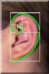 Fibonacci Sequence, ear