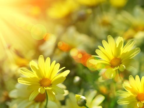 beautiful flower, sunshine, in sun