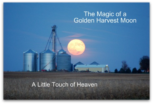 A little touch of Heaven, Harvest Moon,  Life after Death