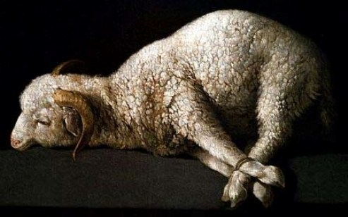 lamb of god, jesus sacrifice