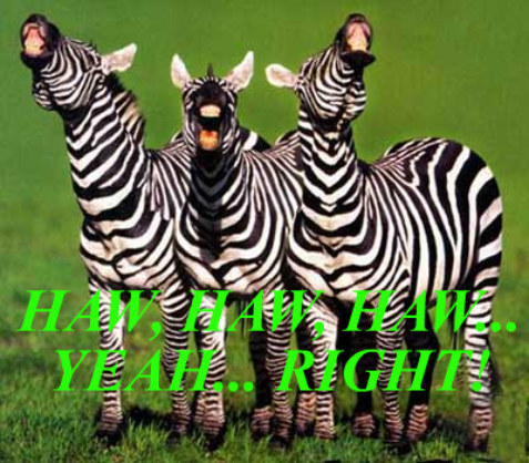laughing, animals, zebras, funny quote