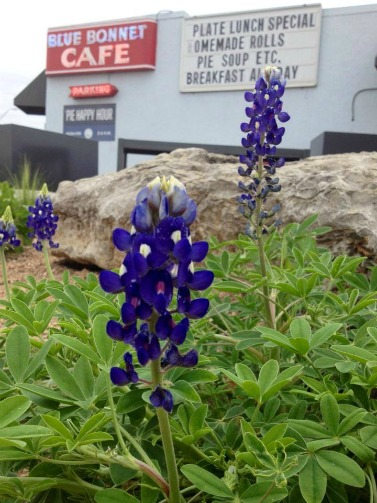 Blue Bonnet Cafe, Marble Falls Texas, John 3:16