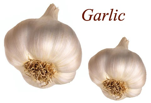 Garlic, health food