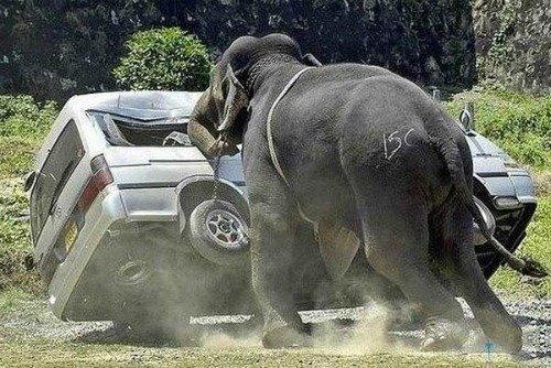 funny elephant, pushing van, comfort & encouragement quote
