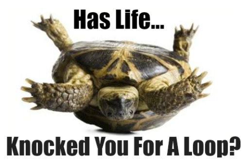 Life Can Be Tough, Knocked For A Loop, Funny Life Pic