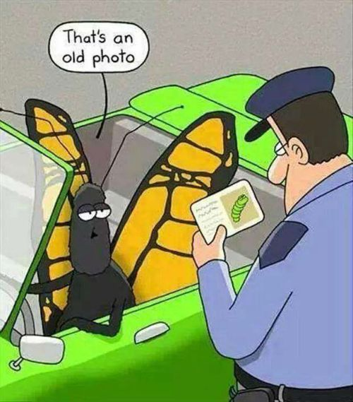 funny christian picture, butterfly, change