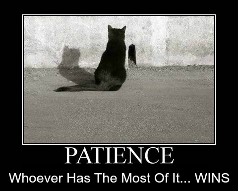 Patience, Cat Waiting For Mouse, Funny