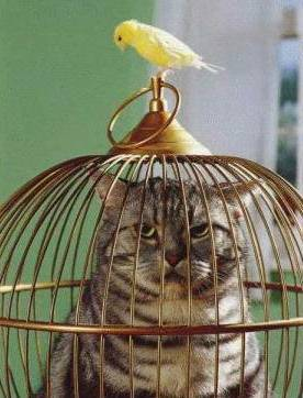 funny christian stories, pictures, cat and bird, funny embarrassing