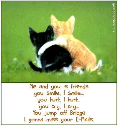 funny friends picture, funny cats, you and me, funny quote